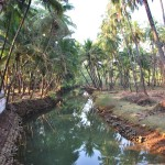 agonda-village-hike-goa-india