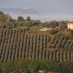 Yoga-Teacher-Training-Italy-grape-field