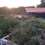 Mayacamas Ranch Sunset Garden